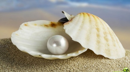 white-pearl-in-oyster